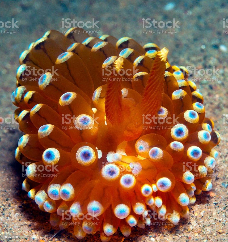 nudibranch10 stock photo