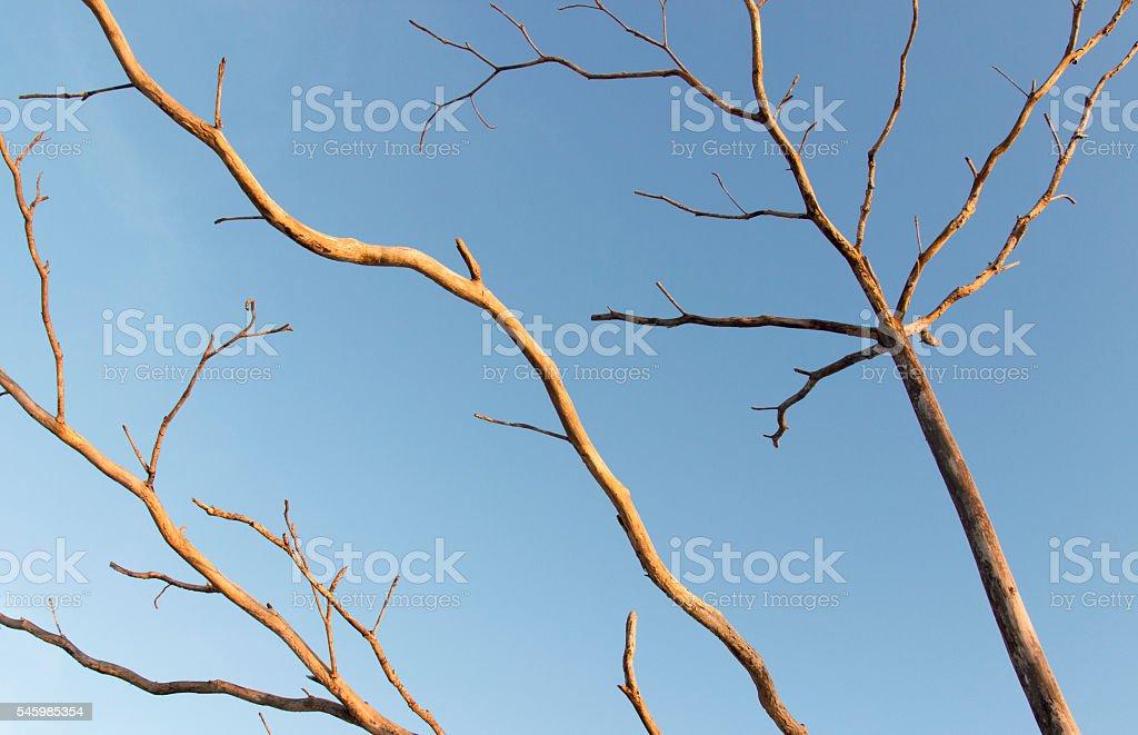 numb tree stock photo