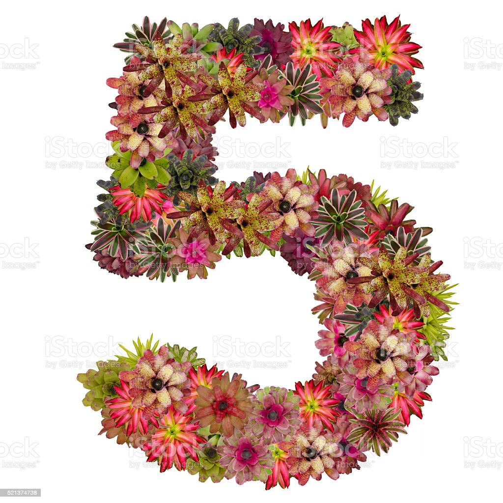 Number 5 Made From Bromeliad Flowers Stock Photo - Download Image Now