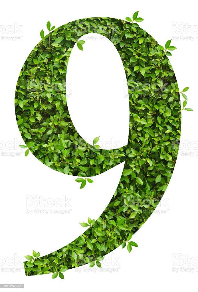 Fotografía de Número 9 Alfabeto De Hojas Verdes y más banco de ...