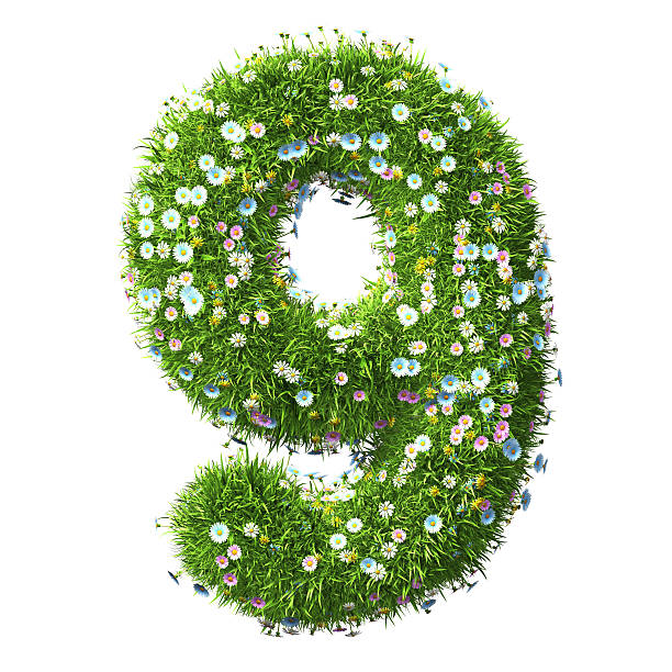 Number 9 Of Grass And Flower stock photo