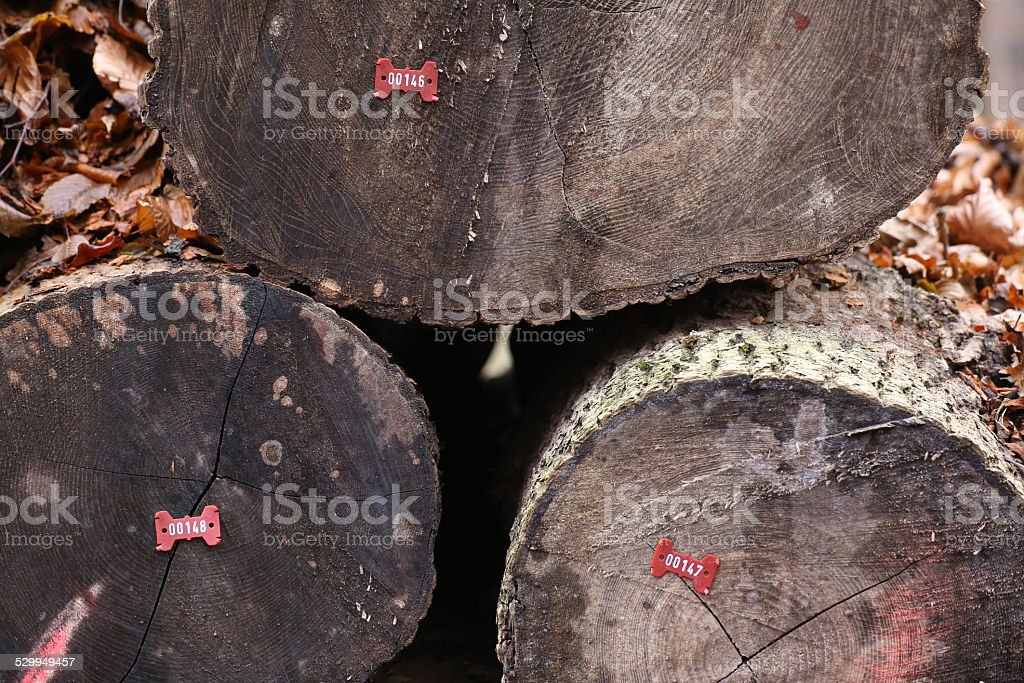 Numbered Logs stock photo