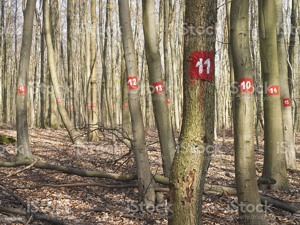 Numbered trees in forest stock photo