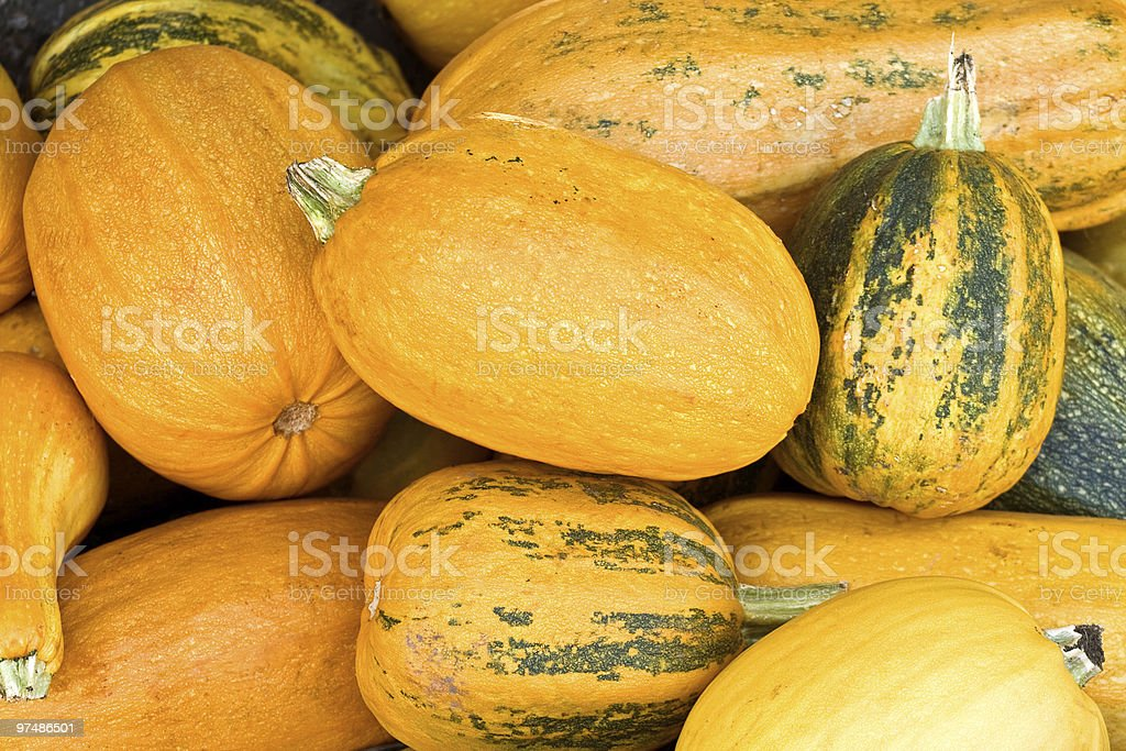 Numerous natural pumpkins royalty-free stock photo
