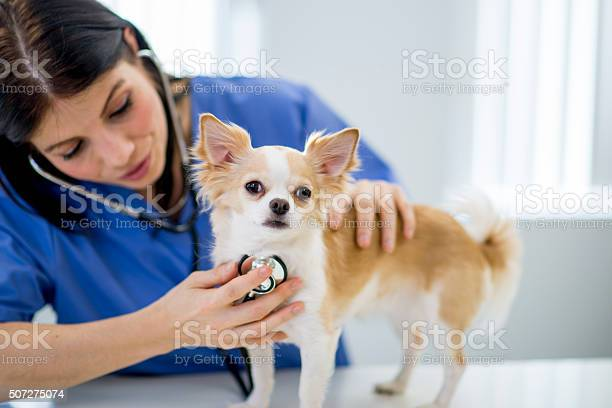 Nurse listening to a dogs heartbeat picture id507275074?b=1&k=6&m=507275074&s=612x612&h=r2ut zpilz0sh56qhmsni46fl5xq7stda dhv4al48i=