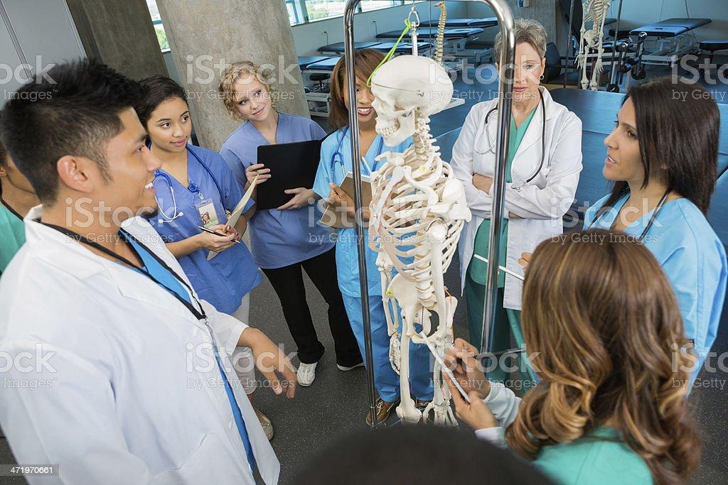 Stillende Oder Medizinstudenten Mit Anatomie Knochen Model In Class ...