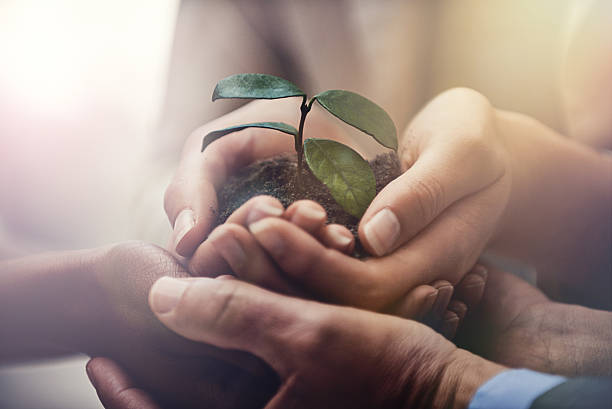 nurturing corporate growth - dedication stock photos and pictures