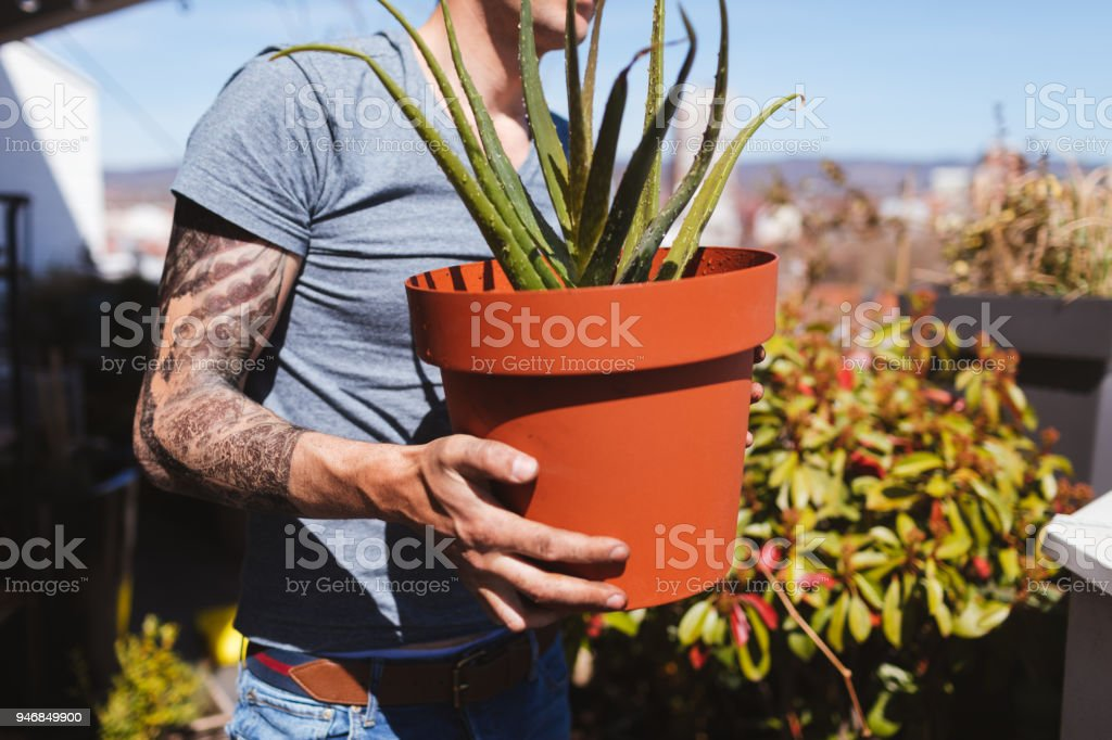 Nourrir mes plantes - Photo