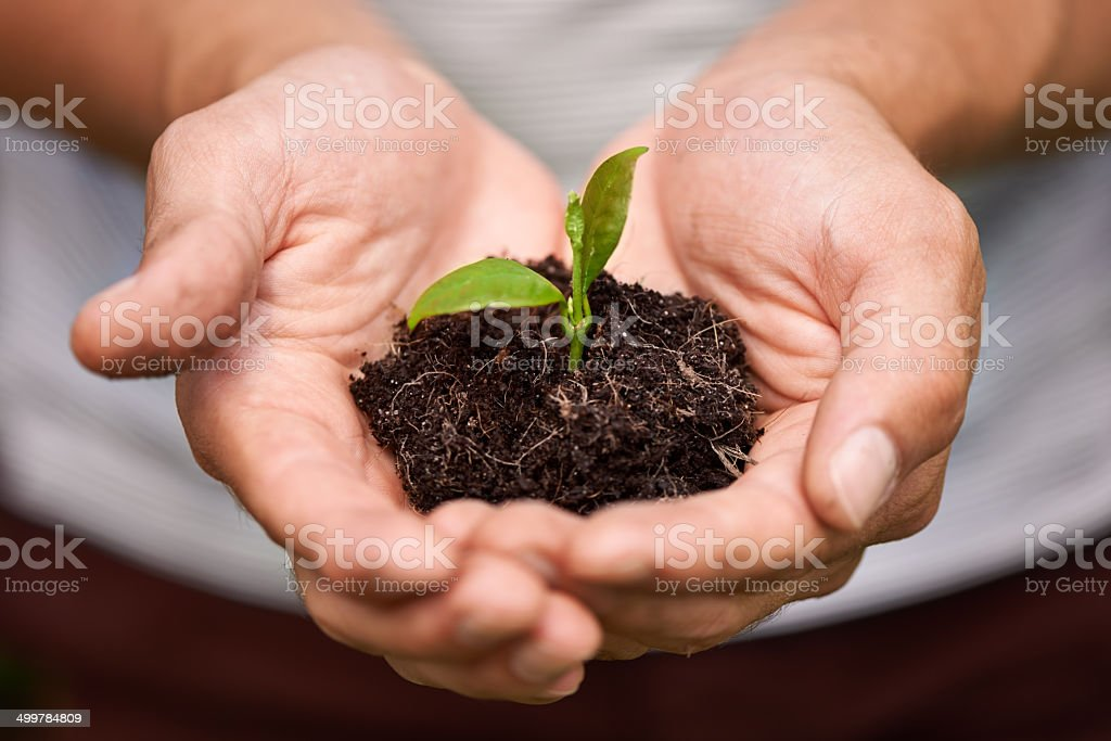 Nurturing new life stock photo