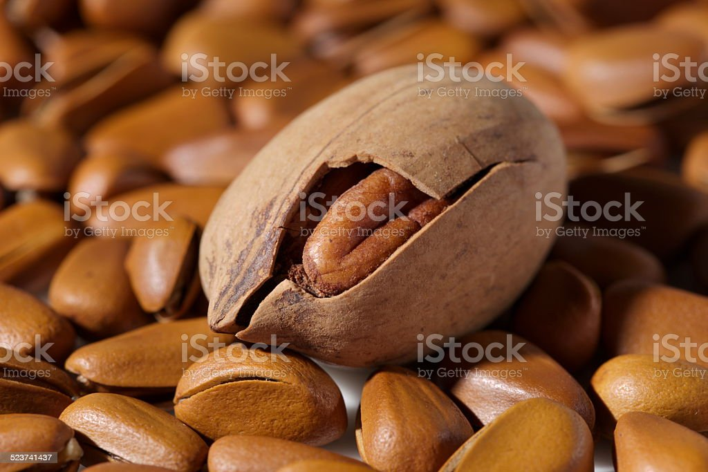 Nut stock photo