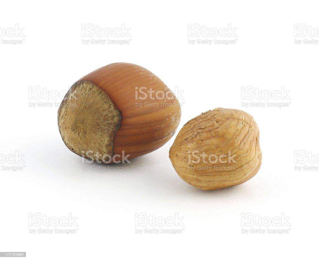 Nut Series: Hazelnut royalty-free stock photo