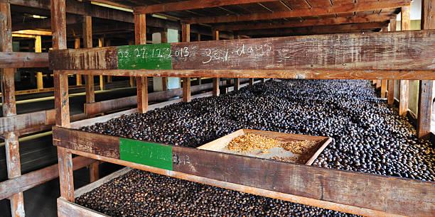 Nutmeg Factory In Gouyave Grenada stock photo