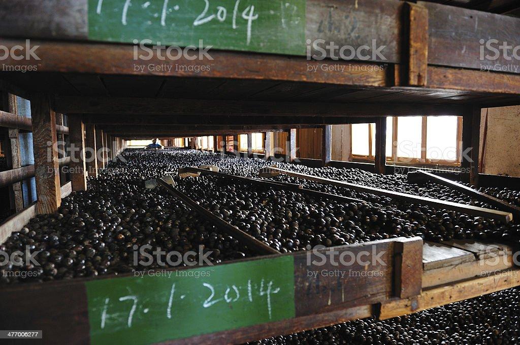 Nutmeg Factory In Gouyave Grenada royalty-free stock photo