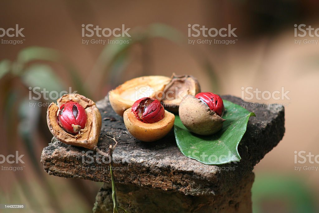 Nutmeg royalty-free stock photo