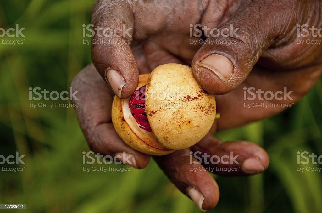 Nutmeg - Royalty-free Abstract Stock Photo