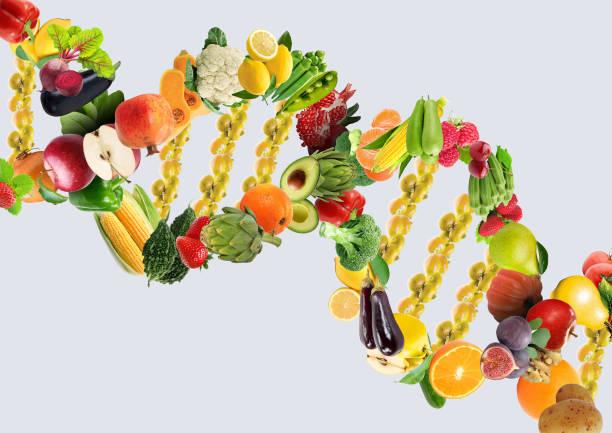 brin d'adn concept nutrigénétique faite avec des fruits et légumes frais en bonne santé - couleur des végétaux photos et images de collection