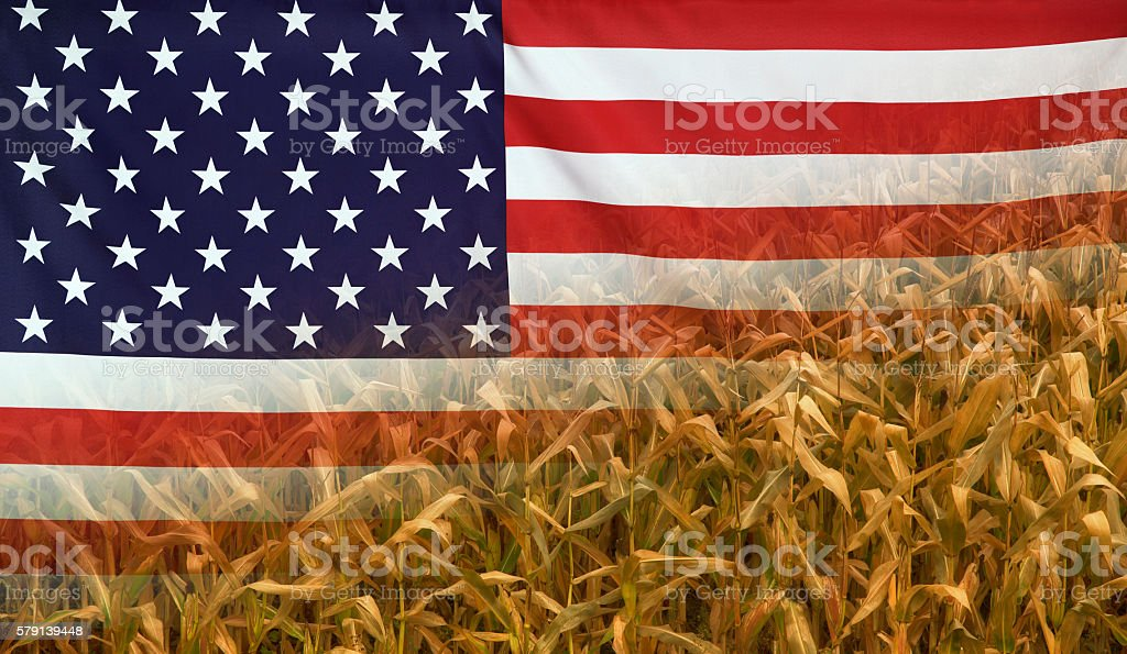USA Nutrition Concept Corn field with fabric Flag stock photo