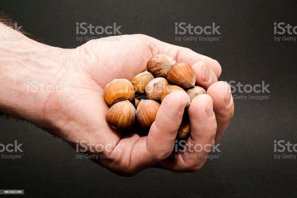 Nuts in hand royalty-free stock photo