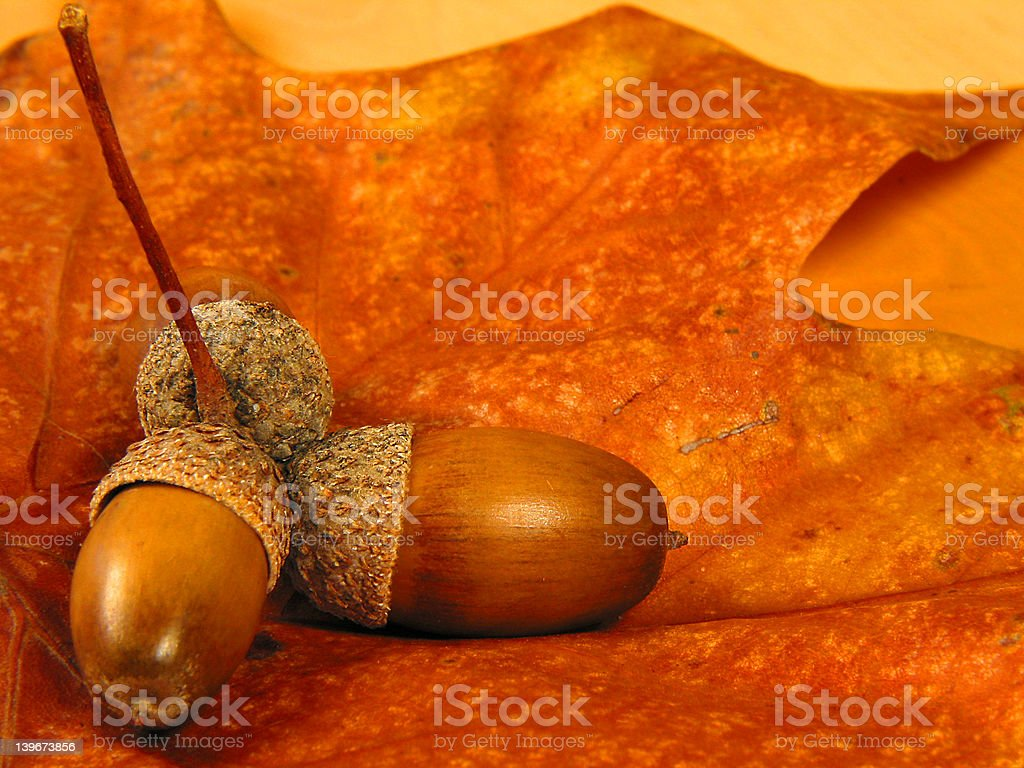Nuts on a leaf royalty-free stock photo