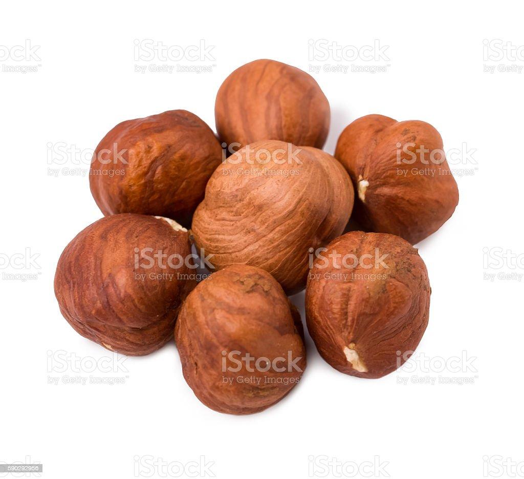 Nuts the filbert royaltyfri bildbanksbilder