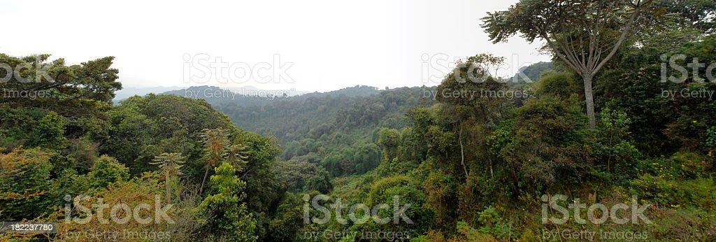 Nyungwe rainforest - south west of Rwanda royalty-free stock photo