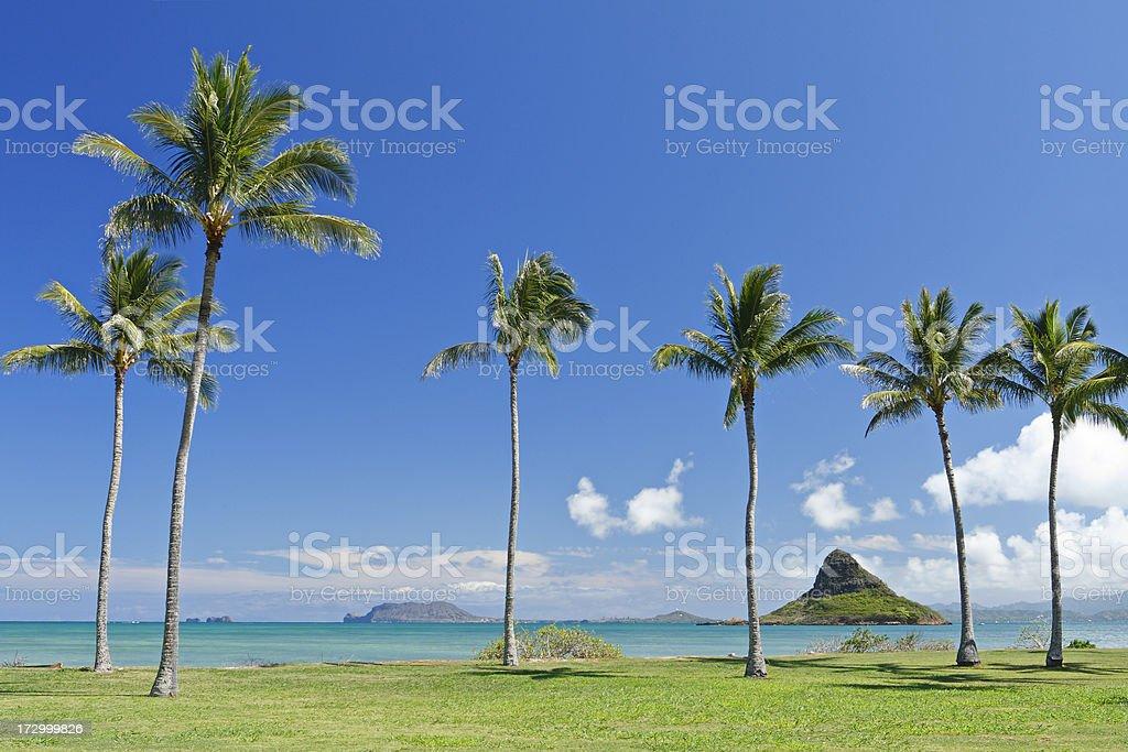 Oahu Landscape royalty-free stock photo