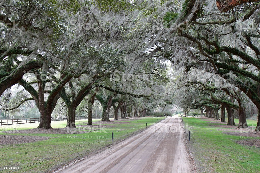 Oak Alley, Boone Hall Plantation - Charleston, SC - USA stock photo