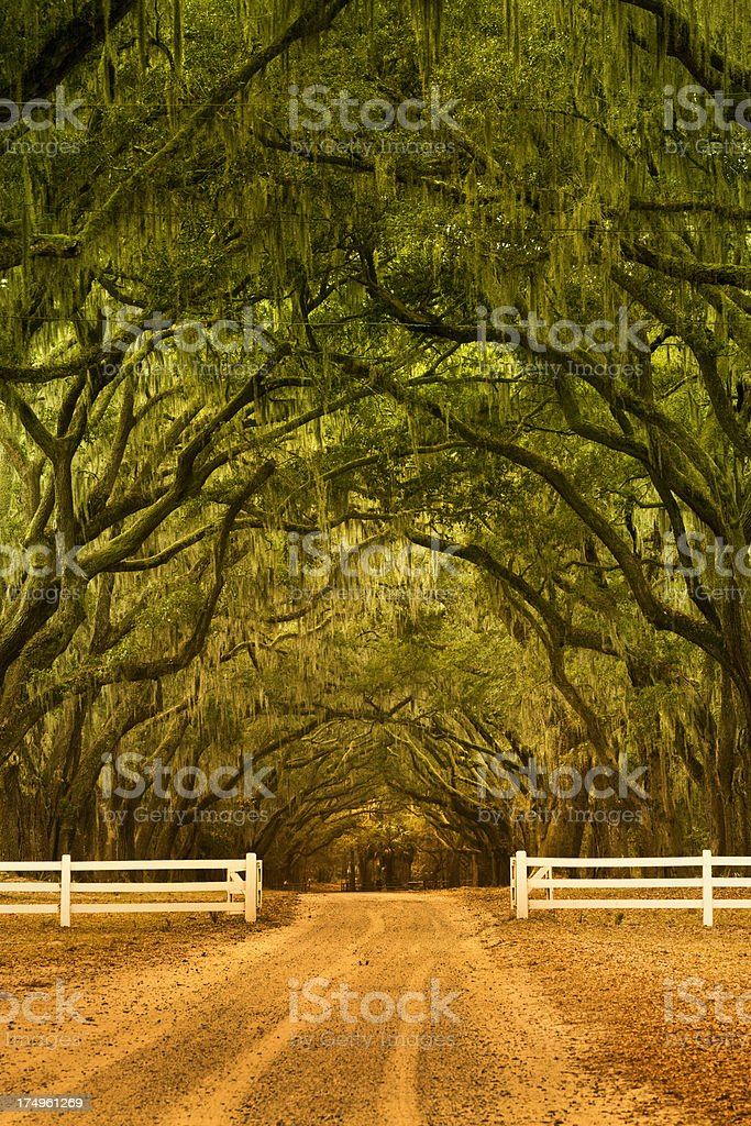 Oak alley in Savannah Georgia royalty-free stock photo