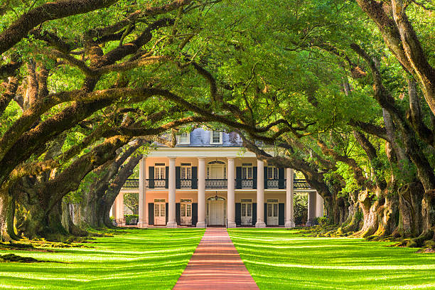 Oak Alley Plantation Vacherie, LA, USA - May 12, 2016: The tree canopy of Oak Alley Plantation. The oak trees were planted in the early 1800's and the property is designated as a National Historic Landmark. southern usa stock pictures, royalty-free photos & images