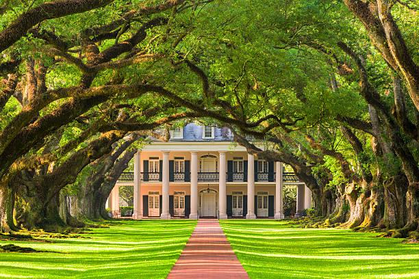 oak alley plantation - vorgarten landschaftsbau stock-fotos und bilder