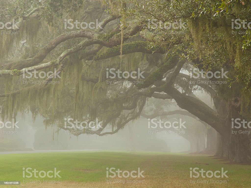 Oak Avenue royalty-free stock photo