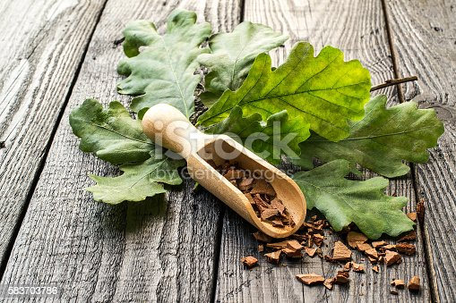 Medicinal plant oak (Quercus). Branch and oak bark in a scoop on a dark wooden table. In herbal medicine used the bark, leaves and acorns. Acorns are used as a substitute for coffee. Selective focus