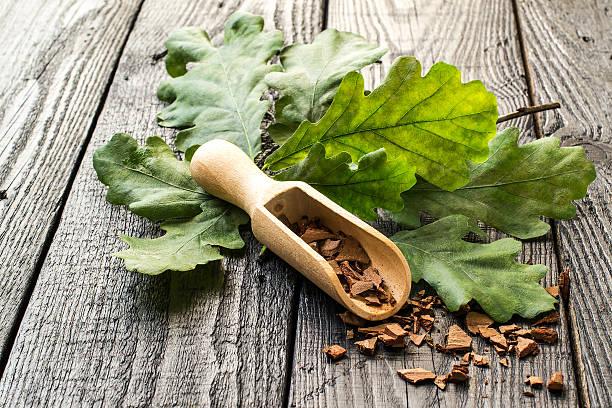 Oak branch and oak bark stock photo