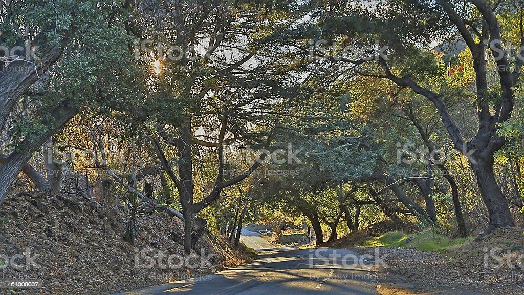 Oak Covered Road stock photo