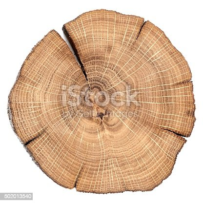 istock Oak cracked split with growth rings isolated 502013540