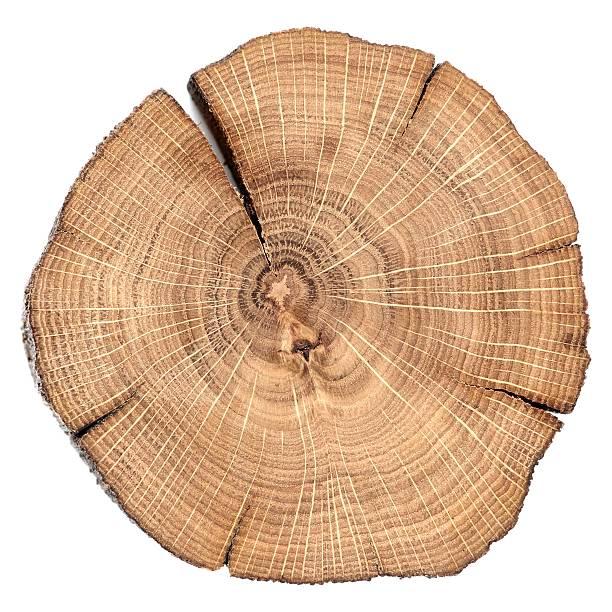 oak gebrochen split mit wachstum ringe isoliert - holzstamm stock-fotos und bilder