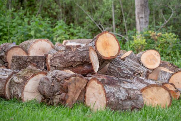Oak Firewood Logs ready to be split stock photo