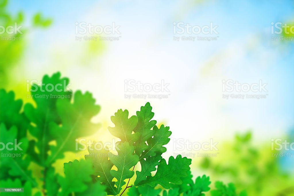 Oak Foliage royalty-free stock photo