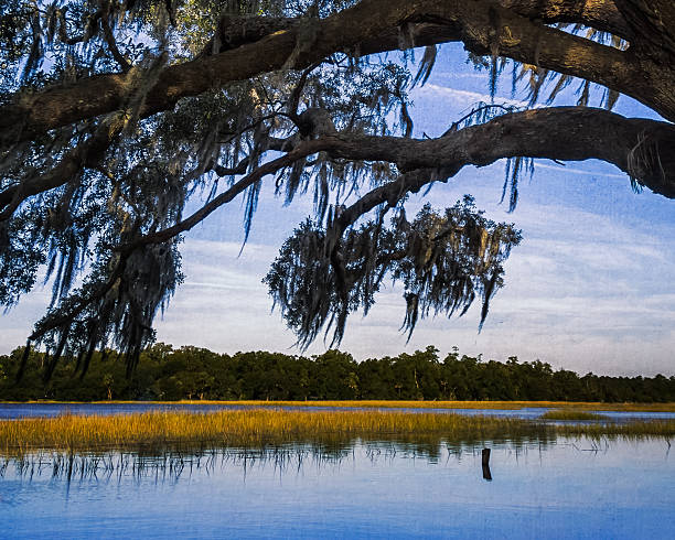 Oak Hanging Over River stock photo