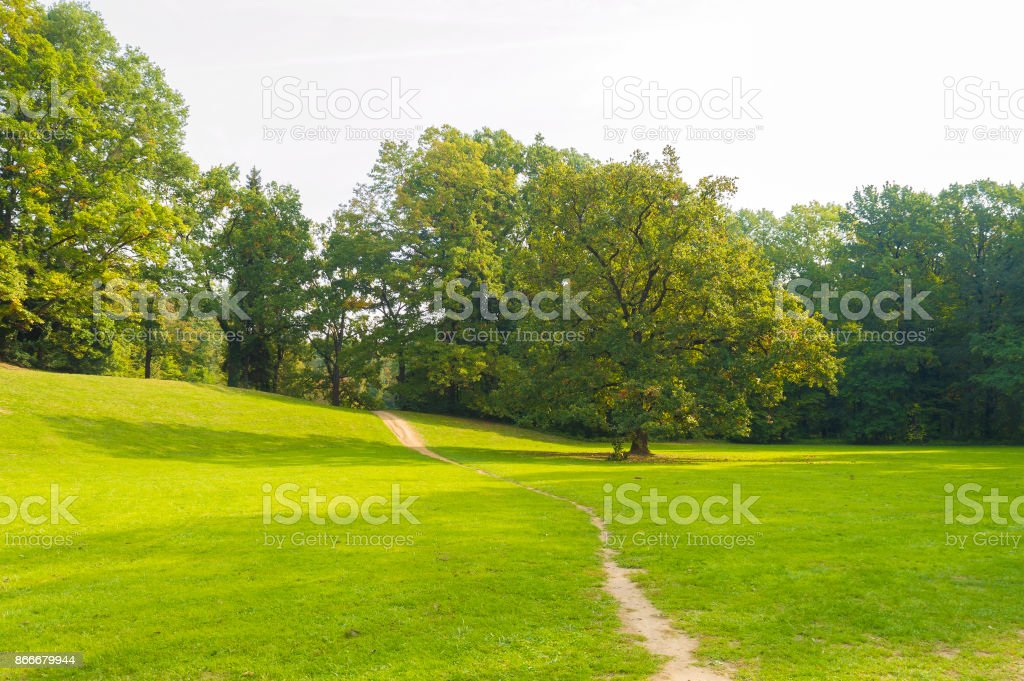 Oak in park stock photo