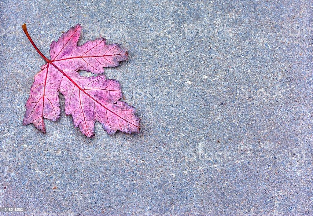 Oak leaf against concrete background stock photo