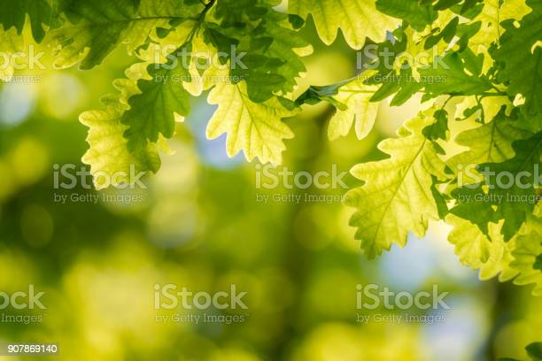 Photo of Oak leaf frame