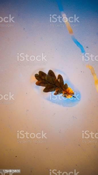 Photo of Oak leaf in window glass