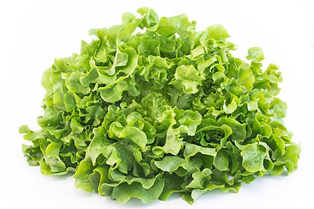 Oak leaf lettuce isolated on white stock photo