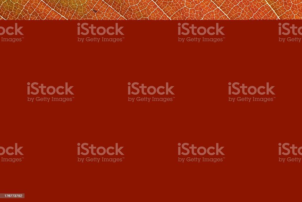 oak leaf macro royalty-free stock photo