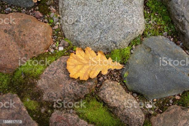 Photo of oak leaf on stones