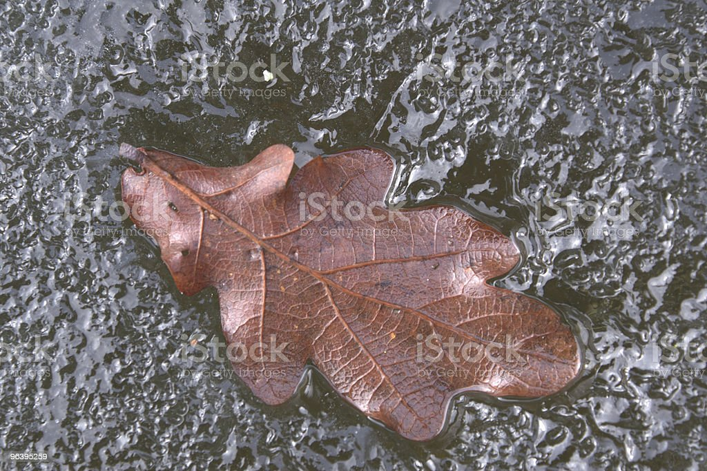 oak leaf - Royalty-free Backgrounds Stock Photo