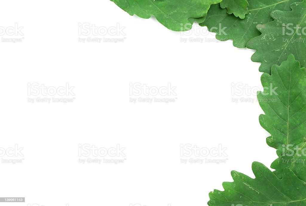 oak leaves border royalty-free stock photo