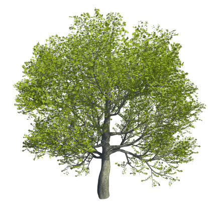 computer generated 3d tree