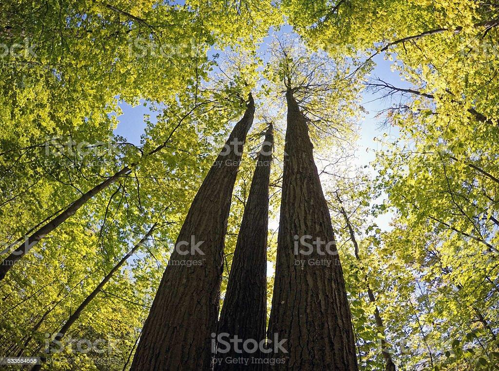 Oak Ridges Moraine Forest stock photo